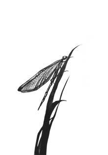 """Daniel Montero. Ilustraciones para """"SECRETOS. Relatos de mucha gente pequeña"""""""