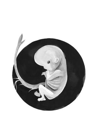 feto germinando