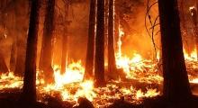 incendio-forestal_20a638c6